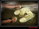 Stinky Feet_2